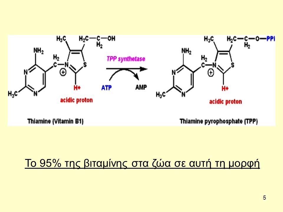 36 Ρόλοι ριβοφλαβίνης Συµµετέχει στις οξειδοαναγωγικές αντιδράσεις σε µεγάλο αριθµό µεταβολικών οδών και στην παραγωγή ενέργειας (οξείδωση γλυκόζης, αµινοξέων, λιπαρών οξέων), µετατροπή της πυριδοξίνης στο ενεργό της συνένζυµο, µετατροπή τρυπτοφάνης σε νιασίνη, αντιδράσεις κύκλου Krebs.