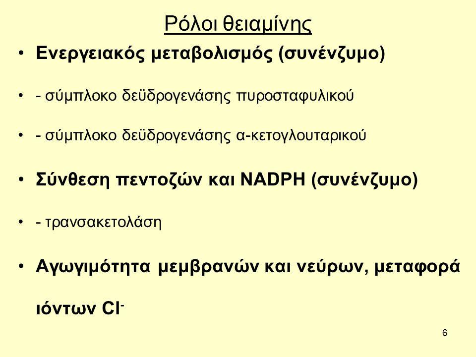 6 Ρόλοι θειαμίνης Ενεργειακός μεταβολισμός (συνένζυμο) - σύμπλοκο δεϋδρογενάσης πυροσταφυλικού - σύμπλοκο δεϋδρογενάσης α-κετογλουταρικού Σύνθεση πεντοζών και ΝΑDPH (συνένζυμο) - τρανσακετολάση Αγωγιμότητα μεμβρανών και νεύρων, μεταφορά ιόντων Cl -