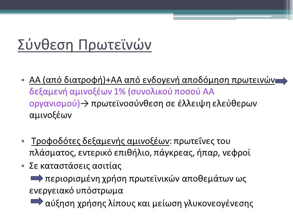 Σύνθεση Πρωτεϊνών ΑΑ (από διατροφή)+ΑΑ από ενδογενή αποδόμηση πρωτεινών δεξαμενή αμινοξέων 1% (συνολικού ποσού ΑΑ οργανισμού)→ πρωτεϊνοσύνθεση σε έλλειψη ελεύθερων αμινοξέων Τροφοδότες δεξαμενής αμινοξέων: πρωτεΐνες του πλάσματος, εντερικό επιθήλιο, πάγκρεας, ήπαρ, νεφροί Σε καταστάσεις ασιτίας περιορισμένη χρήση πρωτεϊνικών αποθεμάτων ως ενεργειακό υπόστρωμα αύξηση χρήσης λίπους και μείωση γλυκονεογένεσης
