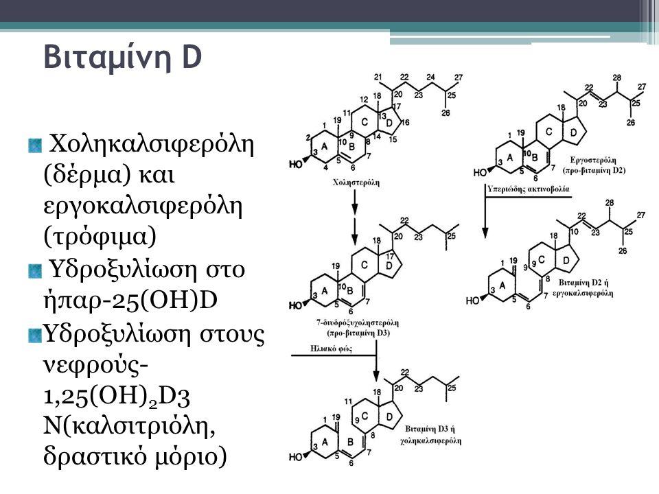 Βιταμίνη D Χοληκαλσιφερόλη (δέρμα) και εργοκαλσιφερόλη (τρόφιμα) Υδροξυλίωση στο ήπαρ-25(ΟΗ)D Υδροξυλίωση στους νεφρούς- 1,25(ΟΗ) 2 D3 Ν(καλσιτριόλη, δραστικό μόριο)