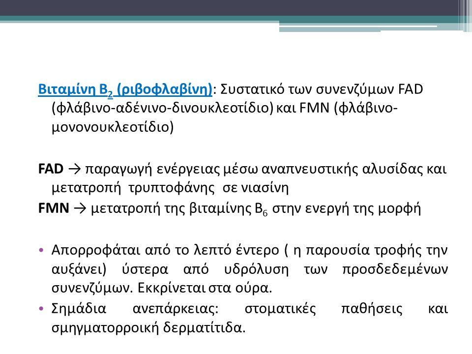Βιταμίνη Β 2 (ριβοφλαβίνη): Συστατικό των συνενζύμων FAD (φλάβινο-αδένινο-δινουκλεοτίδιο) και FMN (φλάβινο- μονονουκλεοτίδιο) FAD → παραγωγή ενέργειας μέσω αναπνευστικής αλυσίδας και μετατροπή τρυπτοφάνης σε νιασίνη FMN → μετατροπή της βιταμίνης Β 6 στην ενεργή της μορφή Απορροφάται από το λεπτό έντερο ( η παρουσία τροφής την αυξάνει) ύστερα από υδρόλυση των προσδεδεμένων συνενζύμων.
