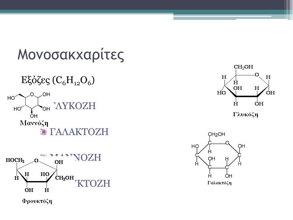 Μονοσακχαρίτες Εξόζες (C 6 H 12 O 6 ) ΓΛΥΚΟΖΗ ΓΑΛΑΚΤΟΖΗ ΜΑΝΝΟΖΗ ΦΡΟΥΚΤΟΖΗ