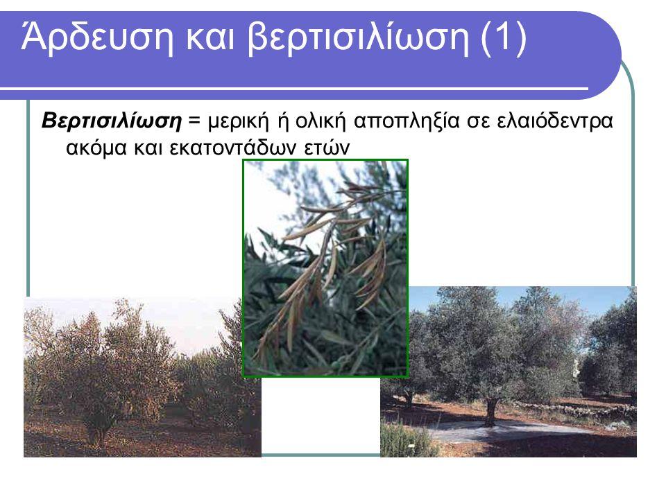 Άρδευση και βερτισιλίωση (1) Βερτισιλίωση = μερική ή ολική αποπληξία σε ελαιόδεντρα ακόμα και εκατοντάδων ετών