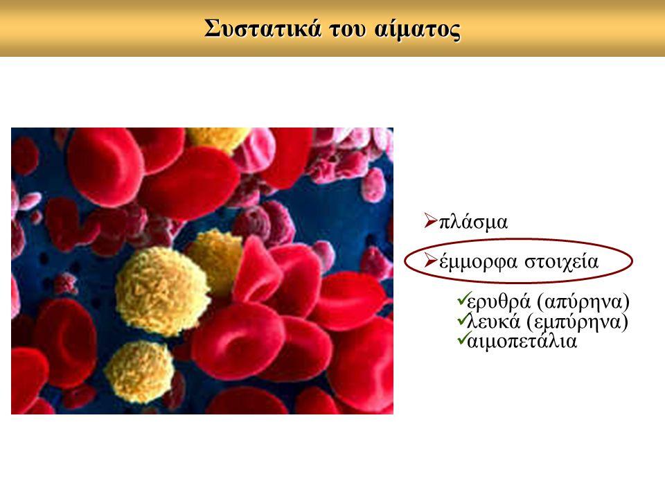 Συστατικά του αίματος  πλάσμα  έμμορφα στοιχεία ερυθρά (απύρηνα) λευκά (εμπύρηνα) αιμοπετάλια