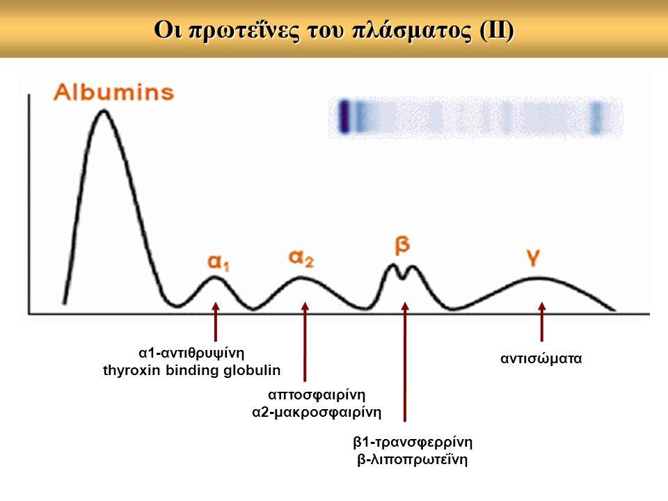 Oι πρωτεΐνες του πλάσματος (ΙΙ) αντισώματα β1-τρανσφερρίνη β-λιποπρωτεΐνη απτοσφαιρίνη α2-μακροσφαιρίνη α1-αντιθρυψίνη thyroxin binding globulin