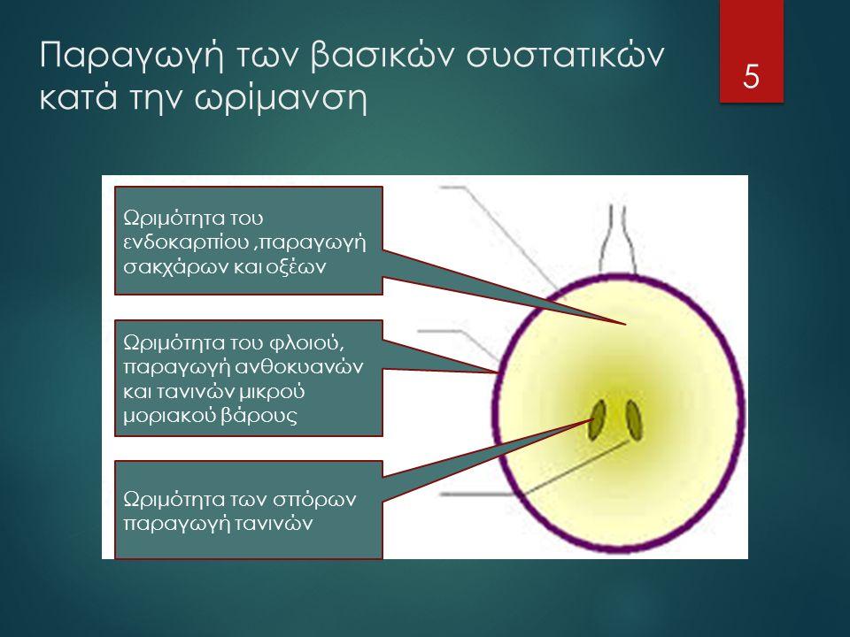 Ω Ωριμότητα του ενδοκαρπίου,παραγωγή σακχάρων και οξέων Ωριμότητα του φλοιού, παραγωγή ανθοκυανών και τανινών μικρού μοριακού βάρους Ωριμότητα των σπόρων παραγωγή τανινών Παραγωγή των βασικών συστατικών κατά την ωρίμανση 5
