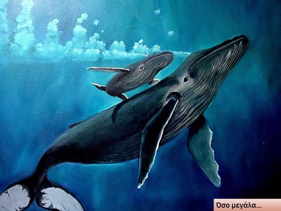Το ίδιο βέβαια συμβαίνει με όλα τα πλάσματα που ζουν στη θάλασσα…