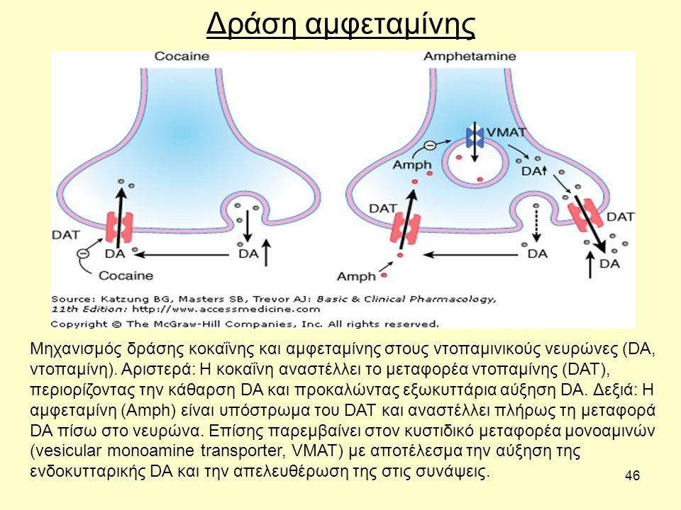 46 Δράση αμφεταμίνης Μηχανισμός δράσης κοκαΐνης και αμφεταμίνης στους ντοπαμινικούς νευρώνες (DA, ντοπαμίνη).