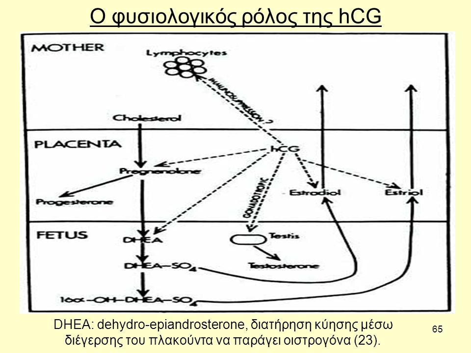 65 DHEA: dehydro-epiandrosterone, διατήρηση κύησης μέσω διέγερσης του πλακούντα να παράγει οιστρογόνα (23).