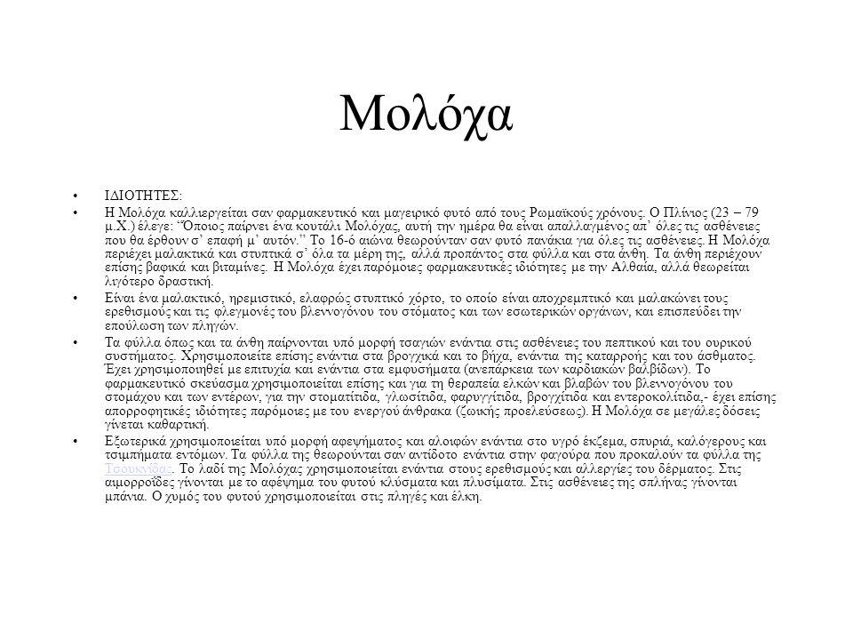 """ΙΔΙΟΤΗΤΕΣ: Η Μολόχα καλλιεργείται σαν φαρμακευτικό και μαγειρικό φυτό από τους Ρωμαϊκούς χρόνους. Ο Πλίνιος (23 – 79 μ.Χ.) έλεγε: """"Όποιος παίρνει ένα"""