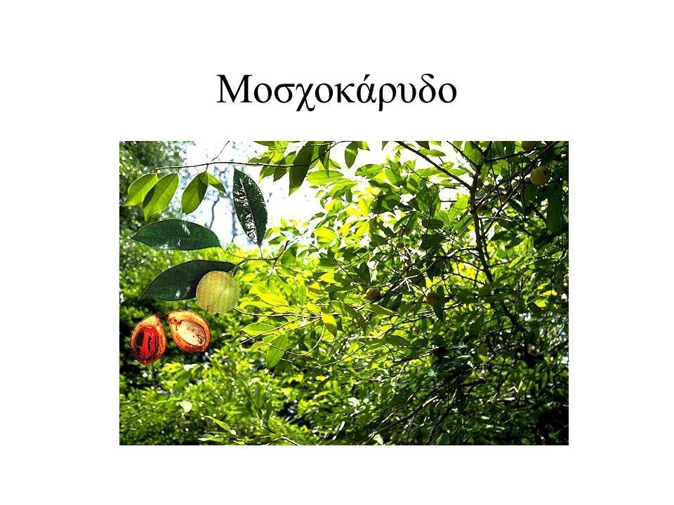 Μοσχοκάρυδο
