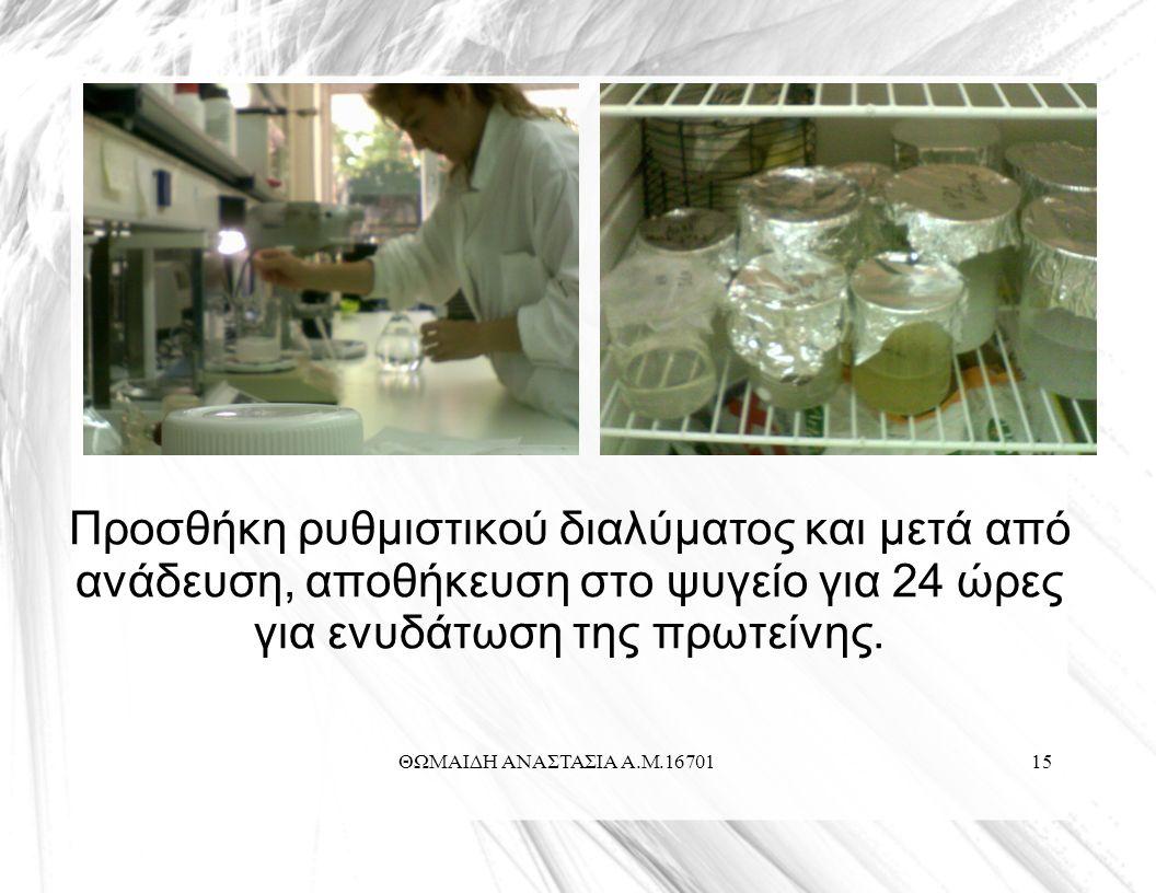ΘΩΜΑΙΔΗ ΑΝΑΣΤΑΣΙΑ Α.Μ.1670115 Προσθήκη ρυθμιστικού διαλύματος και μετά από ανάδευση, αποθήκευση στο ψυγείο για 24 ώρες για ενυδάτωση της πρωτείνης.