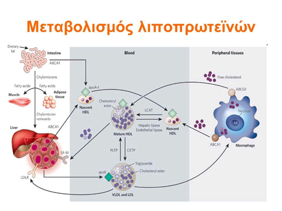 Μεταβολισμός λιποπρωτεϊνών