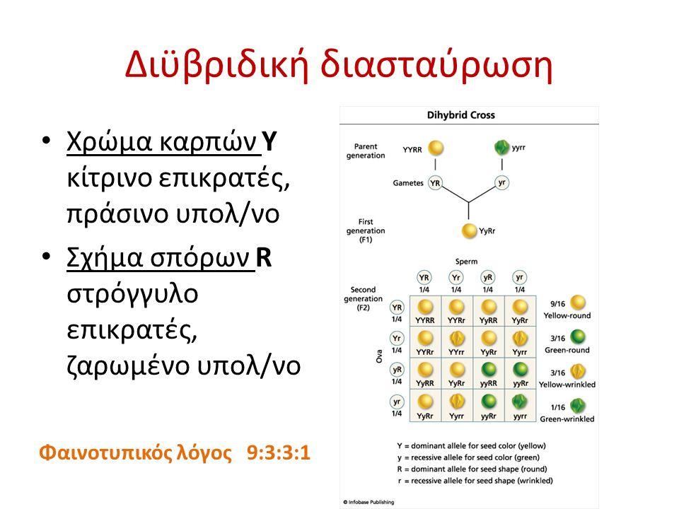 Διϋβριδική διασταύρωση Χρώμα καρπών Y κίτρινο επικρατές, πράσινο υπολ/νο Σχήμα σπόρων R στρόγγυλο επικρατές, ζαρωμένο υπολ/νο Φαινοτυπικός λόγος 9:3:3:1