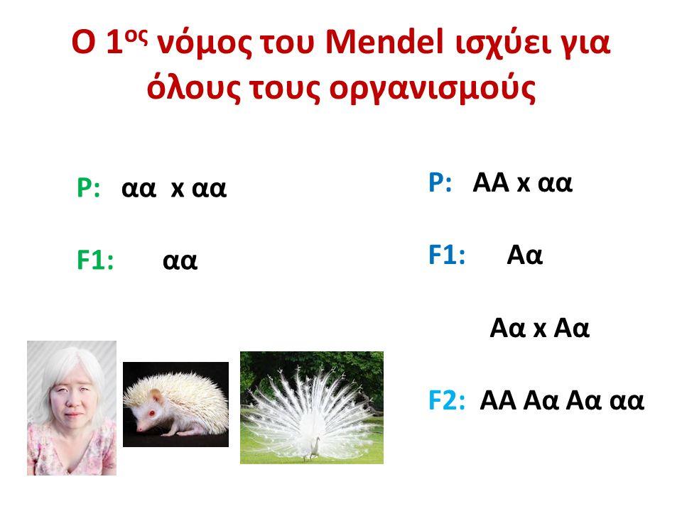 Ο 1 ος νόμος του Mendel ισχύει για όλους τους οργανισμούς P: αα x αα F1: αα P: ΑΑ x αα F1: Αα Αα x Αα F2: ΑΑ Αα Αα αα