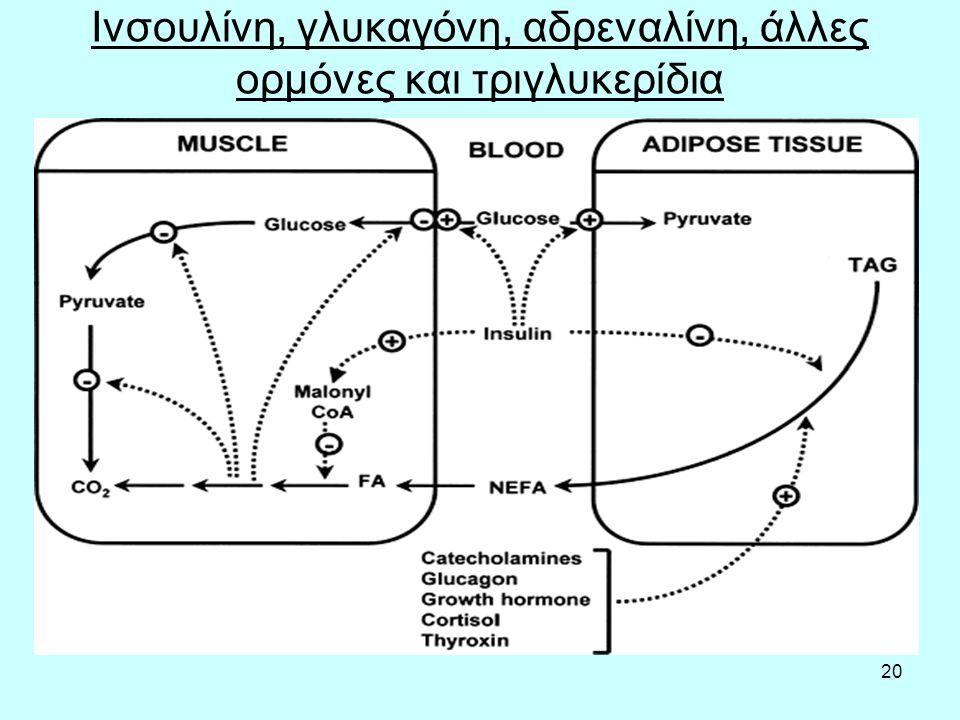 20 Ινσουλίνη, γλυκαγόνη, αδρεναλίνη, άλλες ορμόνες και τριγλυκερίδια