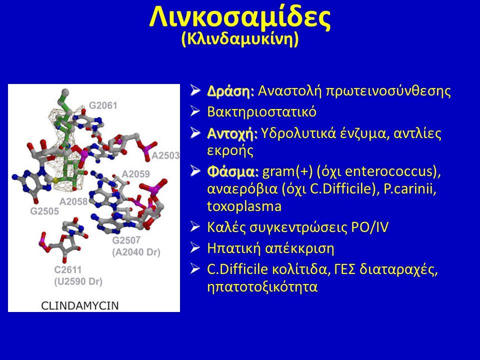  Δράση:  Δράση: Αναστολή πρωτεινοσύνθεσης  Βακτηριοστατικό  Αντοχή:  Αντοχή: Υδρολυτικά ένζυμα, αντλίες εκροής  Φάσμα:  Φάσμα: gram(+) (όχι ent