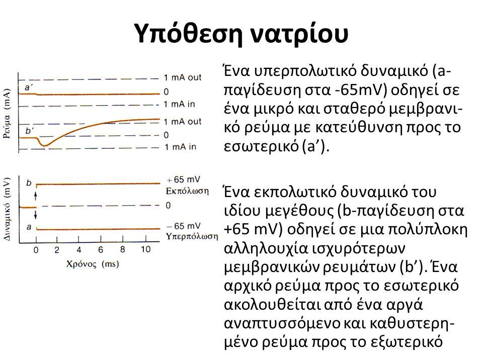 Υπόθεση νατρίου Ένα υπερπολωτικό δυναμικό (a- παγίδευση στα -65mV) οδηγεί σε ένα μικρό και σταθερό μεμβρανι- κό ρεύμα με κατεύθυνση προς το εσωτερικό (a').