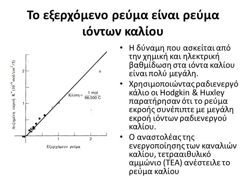 Το εξερχόμενο ρεύμα είναι ρεύμα ιόντων καλίου Η δύναμη που ασκείται από την χημική και ηλεκτρική βαθμίδωση στα ιόντα καλίου είναι πολύ μεγάλη.