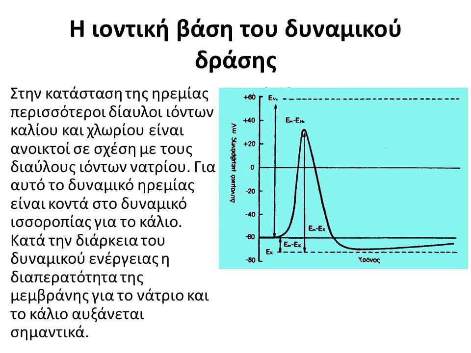 Η ιοντική βάση του δυναμικού δράσης Στην κατάσταση της ηρεμίας περισσότεροι δίαυλοι ιόντων καλίου και χλωρίου είναι ανοικτοί σε σχέση με τους διαύλους ιόντων νατρίου.
