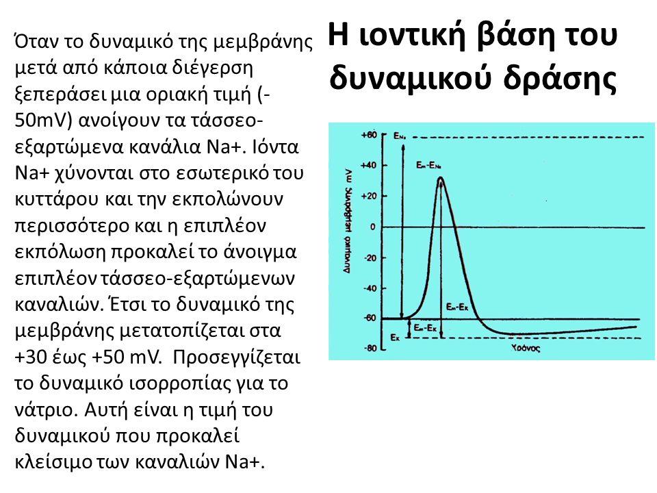 Η ιοντική βάση του δυναμικού δράσης Όταν το δυναμικό της μεμβράνης μετά από κάποια διέγερση ξεπεράσει μια οριακή τιμή (- 50mV) ανοίγουν τα τάσσεο- εξαρτώμενα κανάλια Na+.