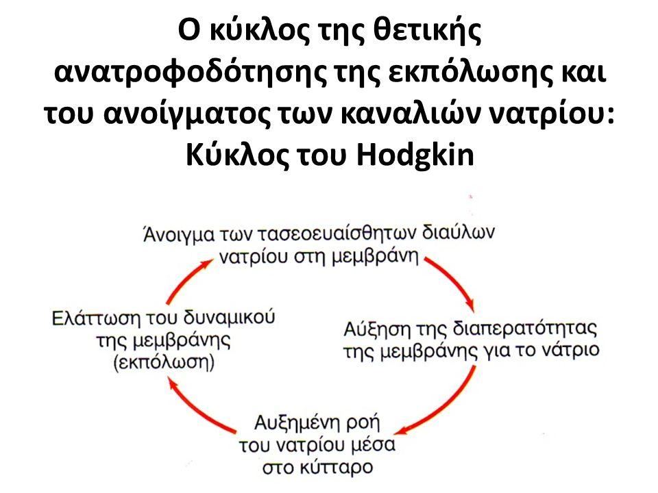 Ο κύκλος της θετικής ανατροφοδότησης της εκπόλωσης και του ανοίγματος των καναλιών νατρίου: Κύκλος του Hodgkin