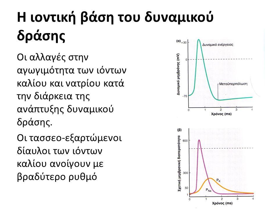 Η ιοντική βάση του δυναμικού δράσης Οι αλλαγές στην αγωγιμότητα των ιόντων καλίου και νατρίου κατά την διάρκεια της ανάπτυξης δυναμικού δράσης.