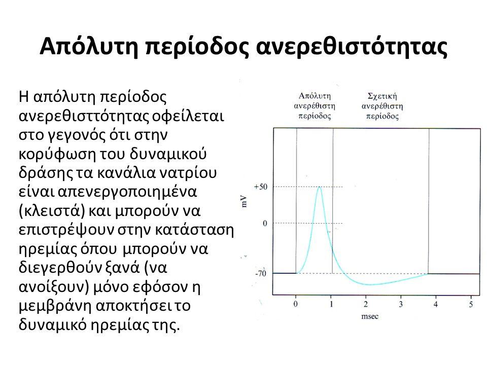 Απόλυτη περίοδος ανερεθιστότητας Η απόλυτη περίοδος ανερεθισττότητας οφείλεται στο γεγονός ότι στην κορύφωση του δυναμικού δράσης τα κανάλια νατρίου ε