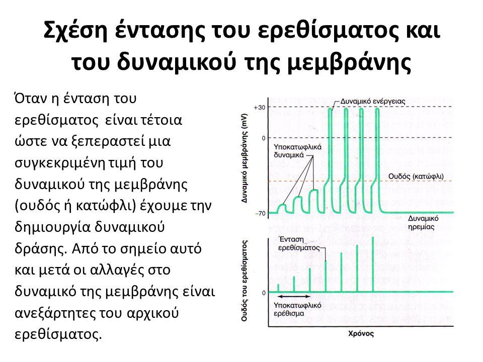Σχέση έντασης του ερεθίσματος και του δυναμικού της μεμβράνης Όταν η ένταση του ερεθίσματος είναι τέτοια ώστε να ξεπεραστεί μια συγκεκριμένη τιμή του δυναμικού της μεμβράνης (ουδός ή κατώφλι) έχουμε την δημιουργία δυναμικού δράσης.