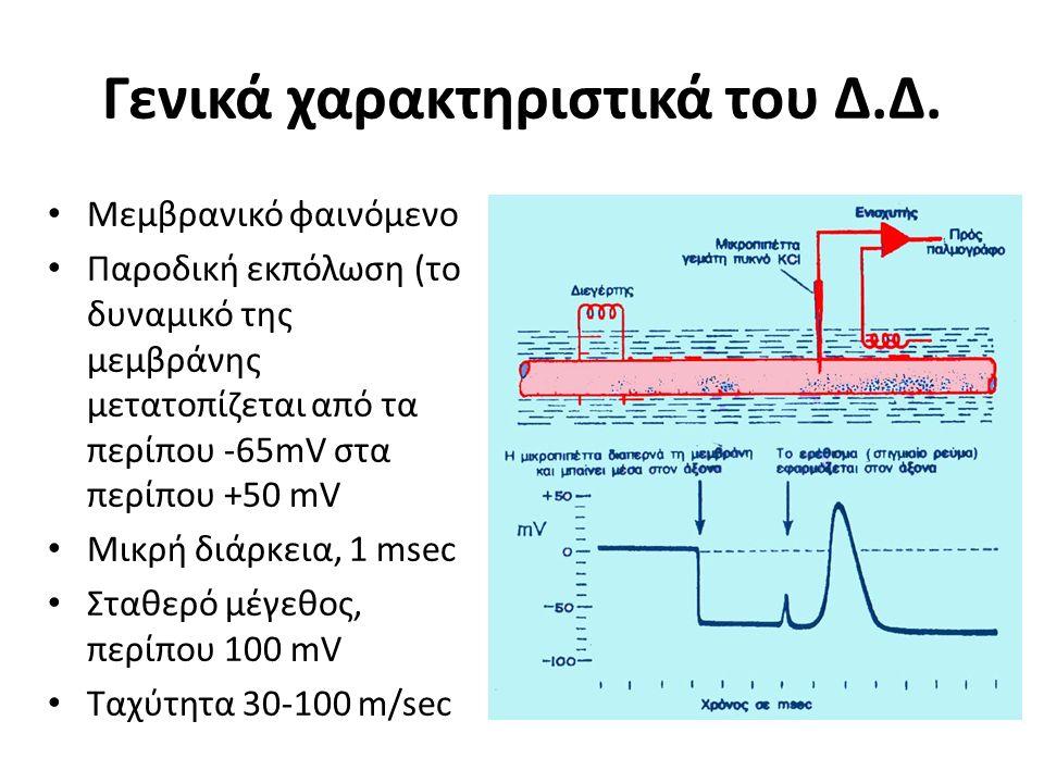 Γενικά χαρακτηριστικά του Δ.Δ. Μεμβρανικό φαινόμενο Παροδική εκπόλωση (το δυναμικό της μεμβράνης μετατοπίζεται από τα περίπου -65mV στα περίπου +50 mV