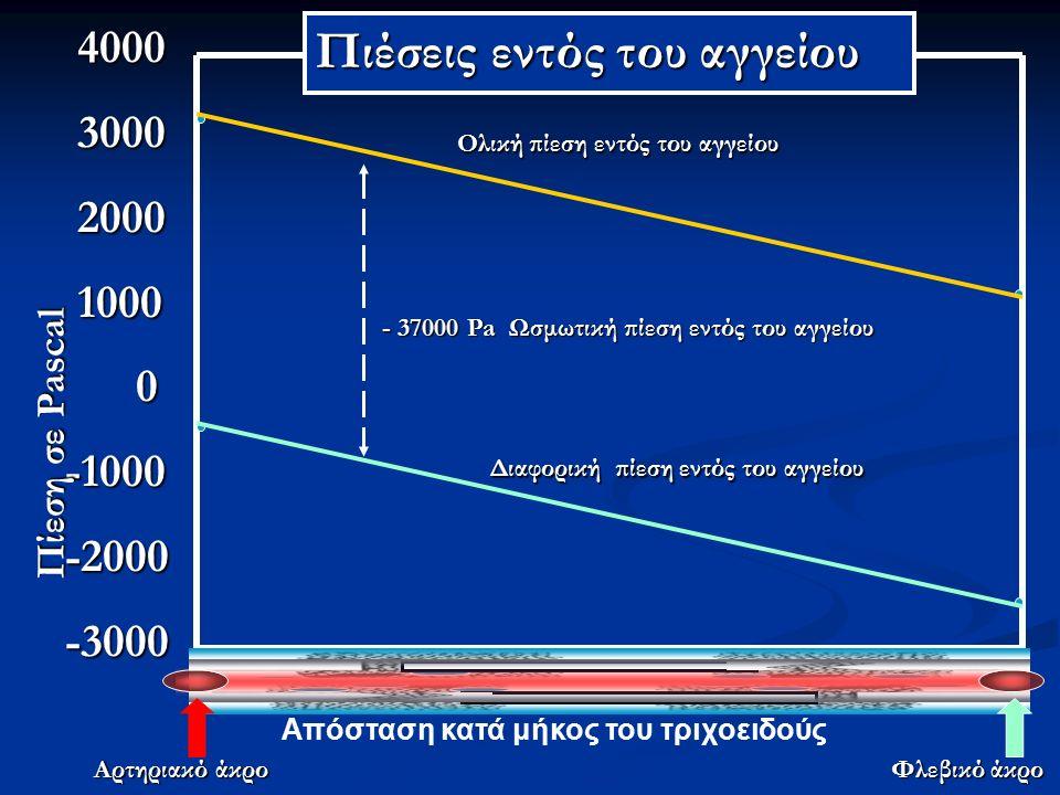 4000 4000 3000 3000 2000 2000 1000 1000 0-1000-2000-3000 Απόσταση κατά μήκος του τριχοειδούς Αρτηριακό άκρο Φλεβικό άκρο Πίεση σε Pascal Ολική πίεση εντός του αγγείου Διαφορική πίεση εντός του αγγείου - 37000 Pa Ωσμωτική πίεση εντός του αγγείου Πιέσεις εντός του αγγείου