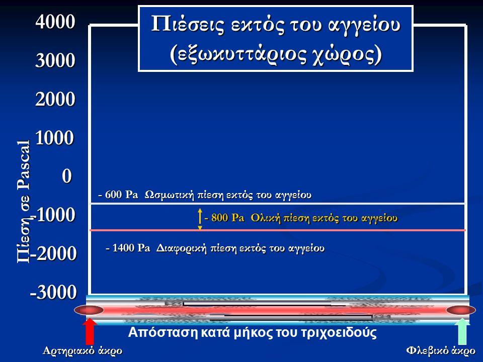4000 4000 3000 3000 2000 2000 1000 1000 0-1000-2000-3000 Απόσταση κατά μήκος του τριχοειδούς Αρτηριακό άκρο Φλεβικό άκρο Πίεση σε Pascal - 600 Pa Ωσμωτική πίεση εκτός του αγγείου - 800 Pa Ολική πίεση εκτός του αγγείου - 1400 Pa Διαφορική πίεση εκτός του αγγείου Πιέσεις εκτός του αγγείου (εξωκυττάριος χώρος)
