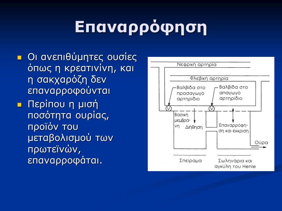 Επαναρρόφηση Οι ανεπιθύμητες ουσίες όπως η κρεατινίνη, και η σακχαρόζη δεν επαναρροφούνται Οι ανεπιθύμητες ουσίες όπως η κρεατινίνη, και η σακχαρόζη δεν επαναρροφούνται Περίπου η μισή ποσότητα ουρίας, προϊόν του μεταβολισμού των πρωτεϊνών, επαναρροφάται.
