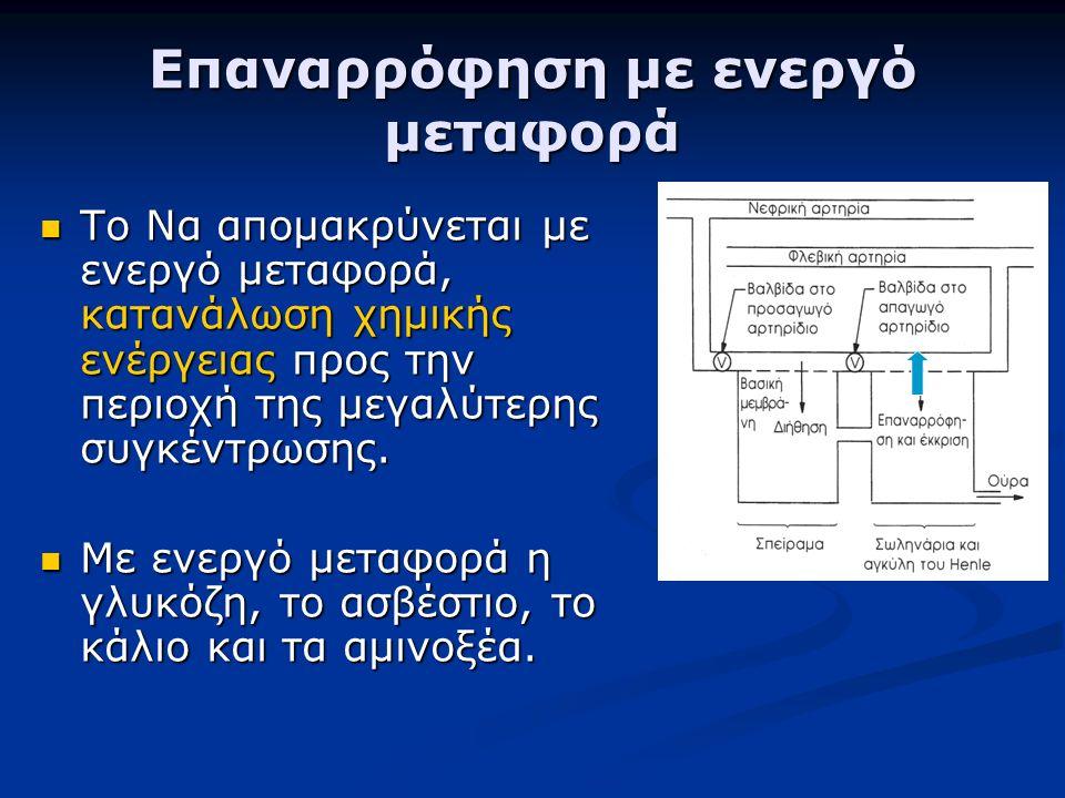Επαναρρόφηση με ενεργό μεταφορά Το Να απομακρύνεται με ενεργό μεταφορά, κατανάλωση χημικής ενέργειας προς την περιοχή της μεγαλύτερης συγκέντρωσης.