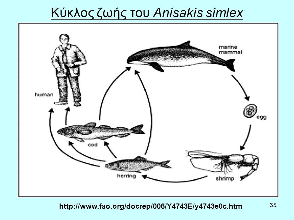 35 Κύκλος ζωής του Anisakis simlex http://www.fao.org/docrep/006/Y4743E/y4743e0c.htm