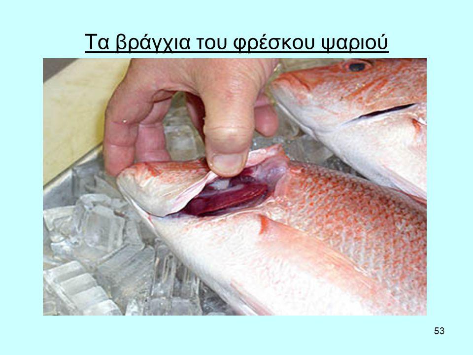 53 Τα βράγχια του φρέσκου ψαριού
