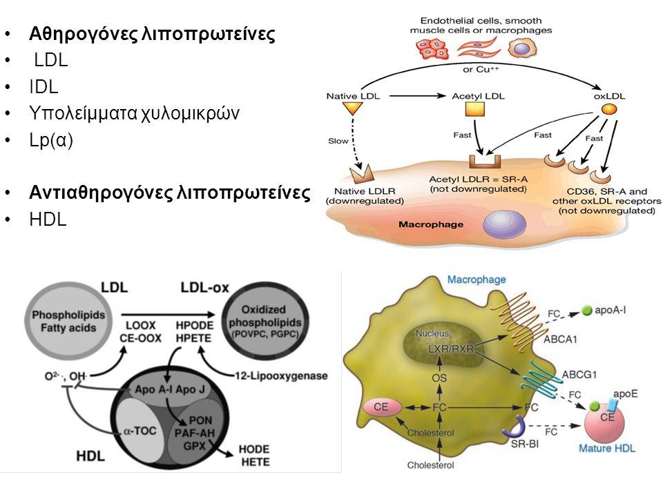 Αθηρογόνες λιποπρωτείνες LDL IDL Υπολείμματα χυλομικρών Lp(α) Αντιαθηρογόνες λιποπρωτείνες HDL