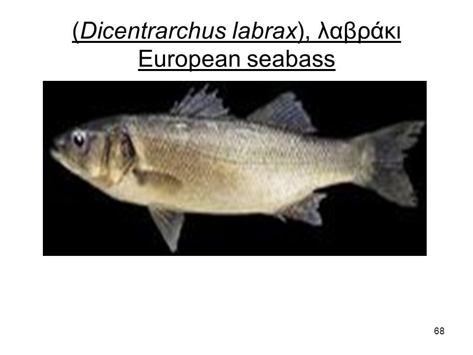 68 (Dicentrarchus labrax), λαβράκι European seabass