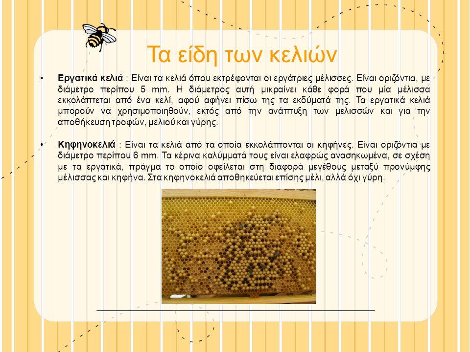 Τα είδη των κελιών Εργατικά κελιά : Είναι τα κελιά όπου εκτρέφονται οι εργάτριες μέλισσες.