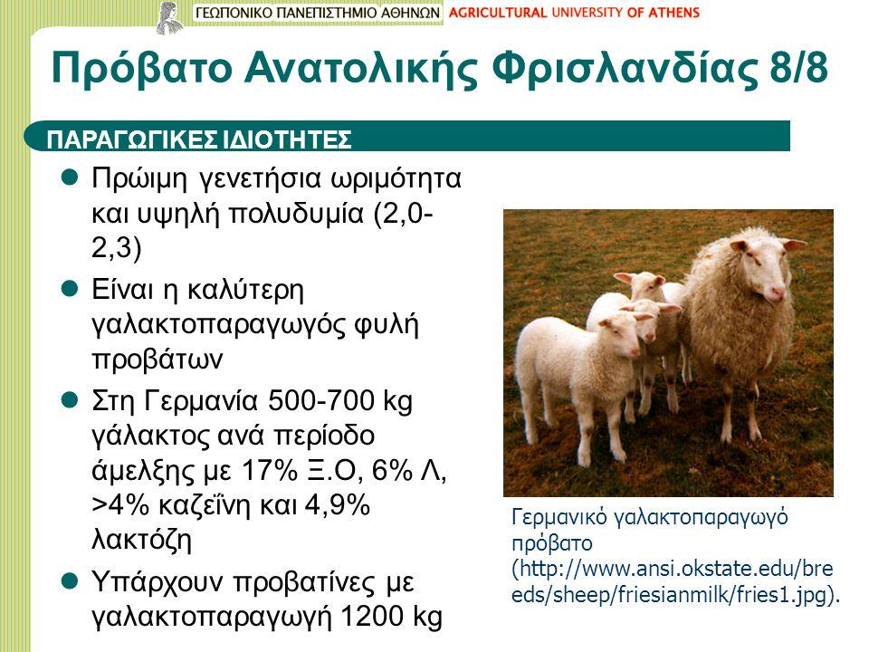 Πρώιμη γενετήσια ωριμότητα και υψηλή πολυδυμία (2,0- 2,3) Είναι η καλύτερη γαλακτοπαραγωγός φυλή προβάτων Στη Γερμανία 500-700 kg γάλακτος ανά περίοδο