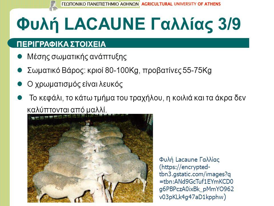 Φυλή LACAUNE Γαλλίας 3/9 Μέσης σωματικής ανάπτυξης Σωματικό Βάρος: κριοί 80-100Kg, προβατίνες 55-75Kg Ο χρωματισμός είναι λευκός Το κεφάλι, το κάτω τμ