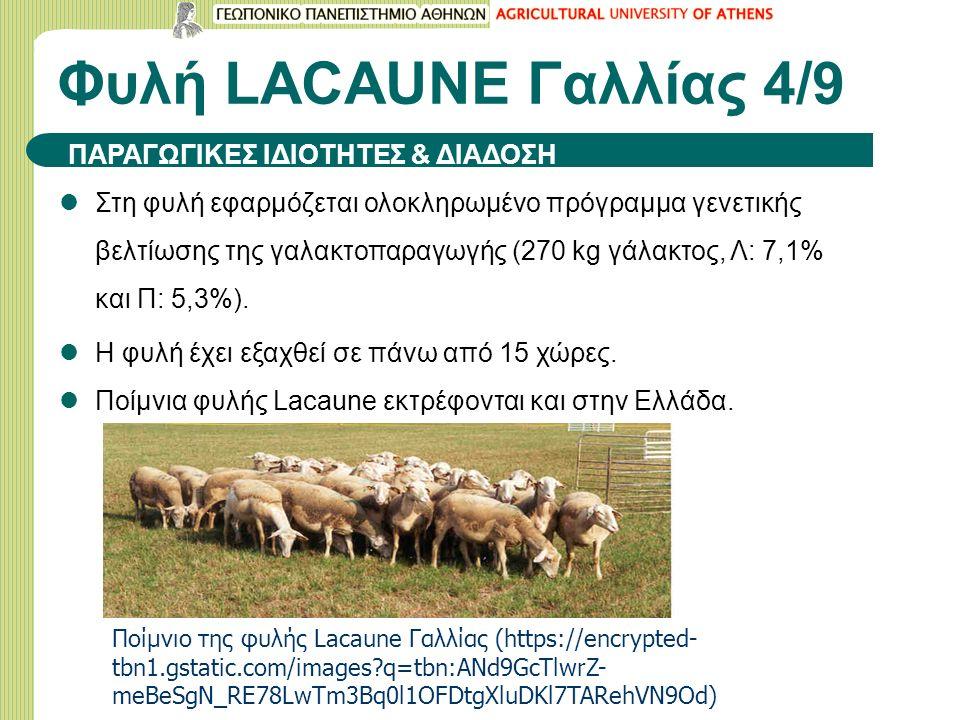 Φυλή LACAUNE Γαλλίας 4/9 Στη φυλή εφαρμόζεται ολοκληρωμένο πρόγραμμα γενετικής βελτίωσης της γαλακτοπαραγωγής (270 kg γάλακτος, Λ: 7,1% και Π: 5,3%).