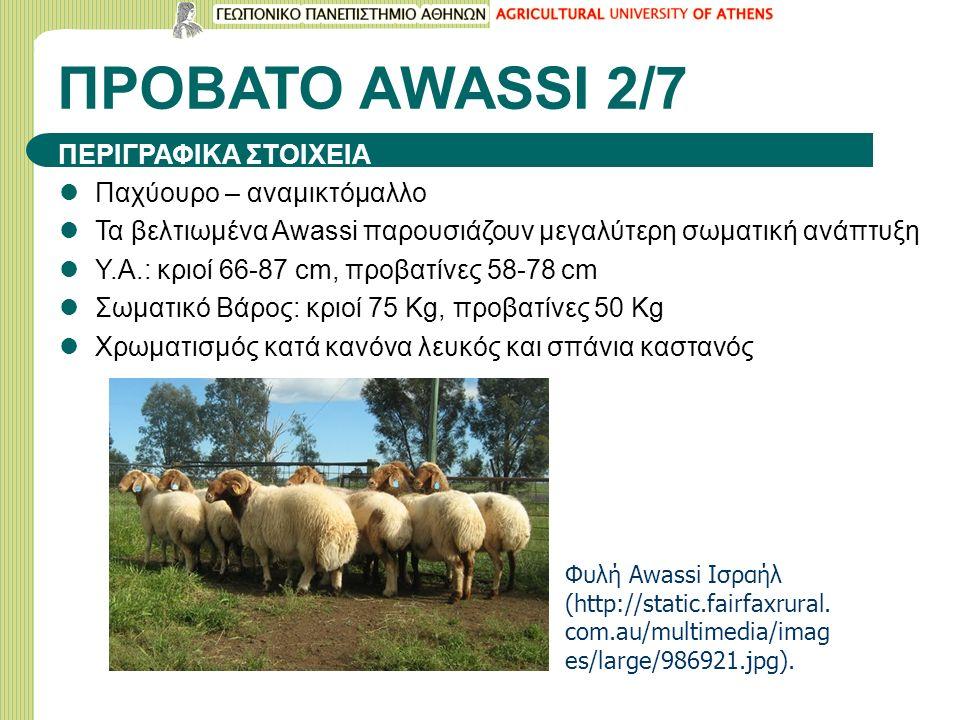 ΠΡΟΒΑΤΟ ΑWASSI 2/7 Παχύουρο – αναμικτόμαλλο Τα βελτιωμένα Awassi παρουσιάζουν μεγαλύτερη σωματική ανάπτυξη Υ.Α.: κριοί 66-87 cm, προβατίνες 58-78 cm Σ