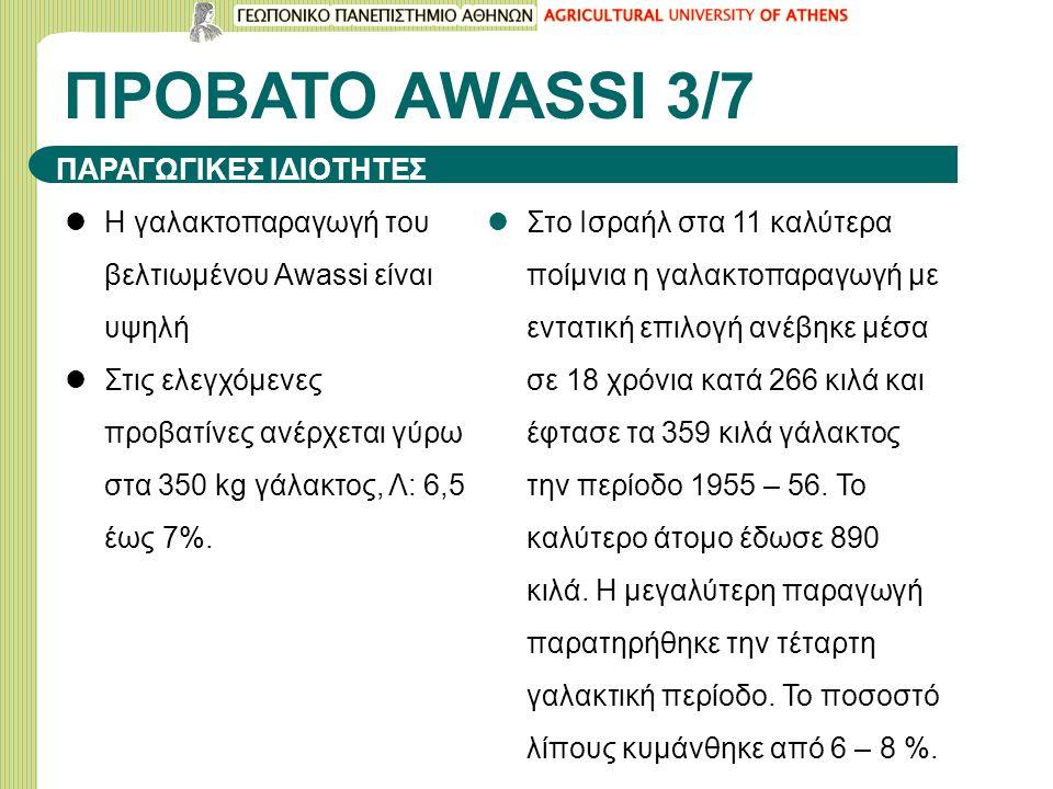 ΠΡΟΒΑΤΟ ΑWASSI 3/7 Η γαλακτοπαραγωγή του βελτιωμένου Awassi είναι υψηλή Στις ελεγχόμενες προβατίνες ανέρχεται γύρω στα 350 kg γάλακτος, Λ: 6,5 έως 7%.