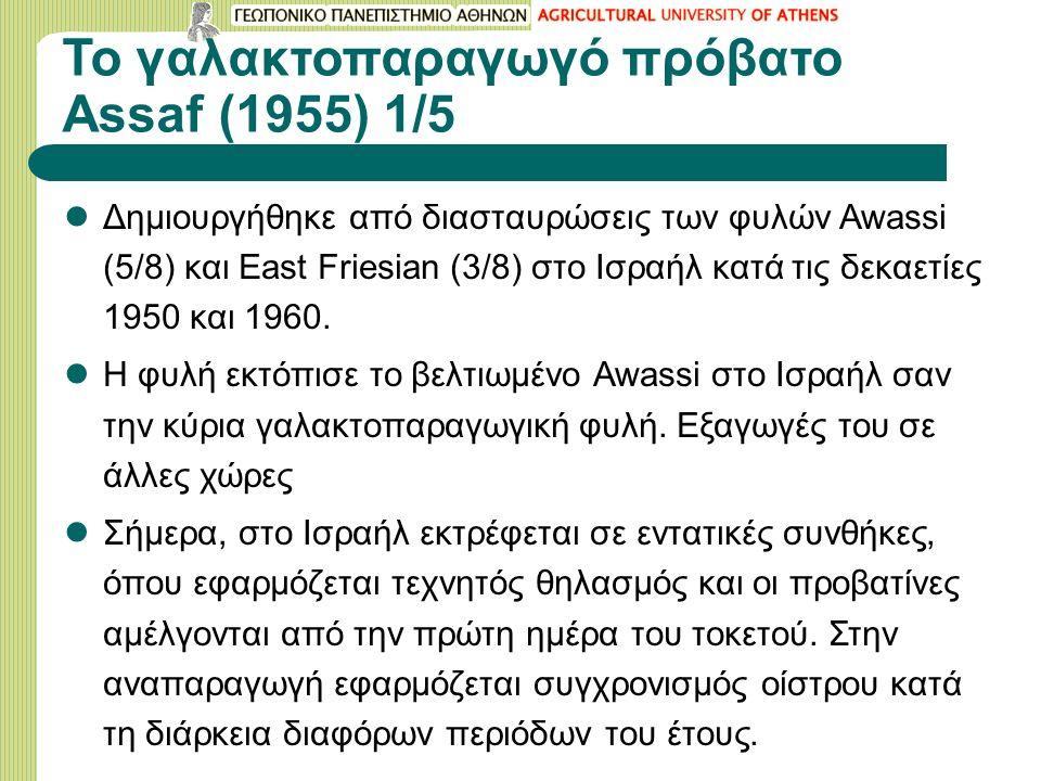 Το γαλακτοπαραγωγό πρόβατο Assaf (1955) 1/5 Δημιουργήθηκε από διασταυρώσεις των φυλών Awassi (5/8) και East Friesian (3/8) στο Ισραήλ κατά τις δεκαετί