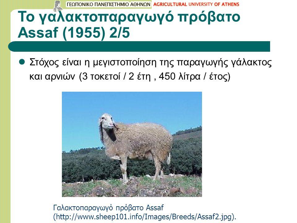Το γαλακτοπαραγωγό πρόβατο Assaf (1955) 2/5 Στόχος είναι η μεγιστοποίηση της παραγωγής γάλακτος και αρνιών (3 τοκετοί / 2 έτη, 450 λίτρα / έτος) Γαλακ