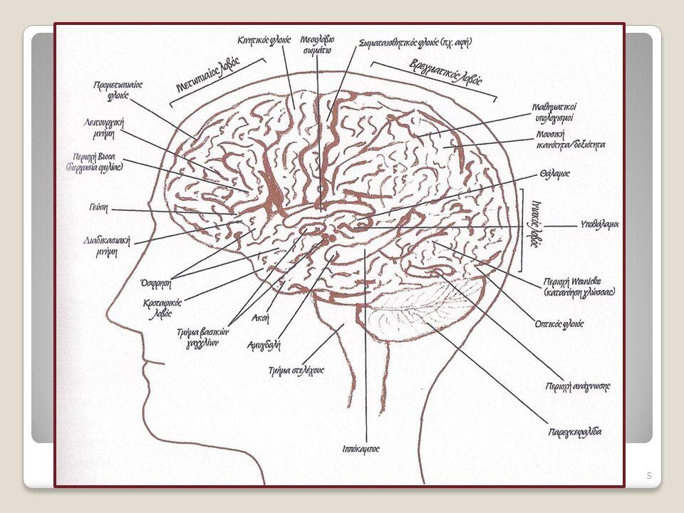Η ολιστική λειτουργία του εγκεφάλου σαν όρχήστρα, του εγκεφάλου σαν όρχήστρα, ολιστικά δηλαδή, έχει καταδειχτεί με πολλές έρευνες Όταν συσχετίζουμε λ.χ.