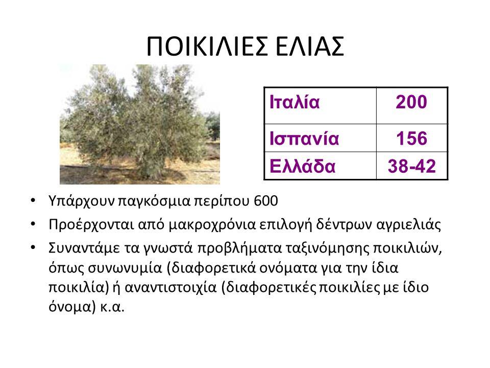 ΠΟΙΚΙΛΙΕΣ ΕΛΙΑΣ Υπάρχουν παγκόσμια περίπου 600 Προέρχονται από μακροχρόνια επιλογή δέντρων αγριελιάς Συναντάμε τα γνωστά προβλήματα ταξινόμησης ποικιλ
