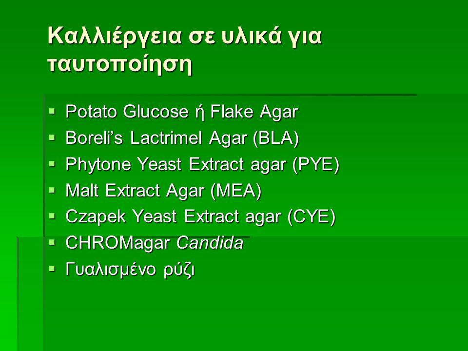 Καλλιέργεια σε υλικά για ταυτοποίηση  Potato Glucose ή Flake Agar  Boreli's Lactrimel Agar (BLA)  Phytone Yeast Extract agar (PYE)  Malt Extract Agar (MEA)  Czapek Υeast Extract agar (CYE)  CHROMagar Candida  Γυαλισμένο ρύζι