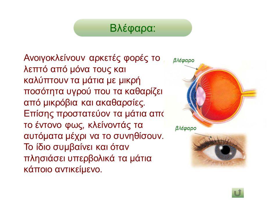 Ανοιγοκλείνουν αρκετές φορές το λεπτό από μόνα τους και καλύπτουν τα μάτια με μικρή ποσότητα υγρού που τα καθαρίζει από μικρόβια και ακαθαρσίες. Επίση